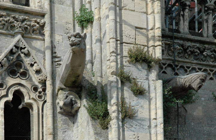 Left The Two Animals Who Grow Gracefully Out Of Carved Vegetation Grape Leaves Have Bodies Birds With Animal Dog Heads