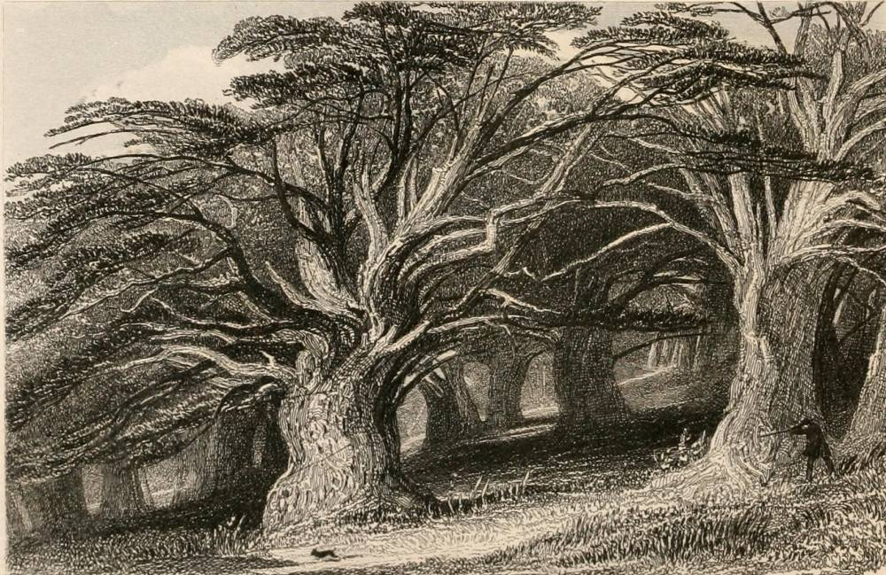 The Druids' Grove