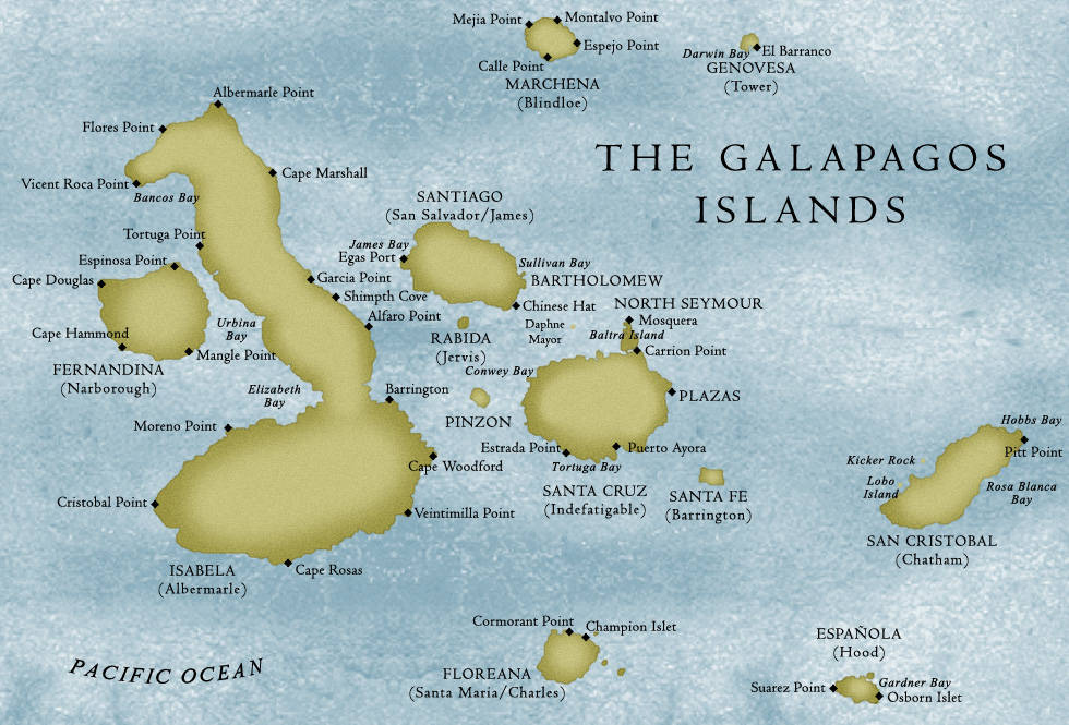 the galapagos islands essay Essays - largest database of quality sample essays and research papers on galapagos islands.